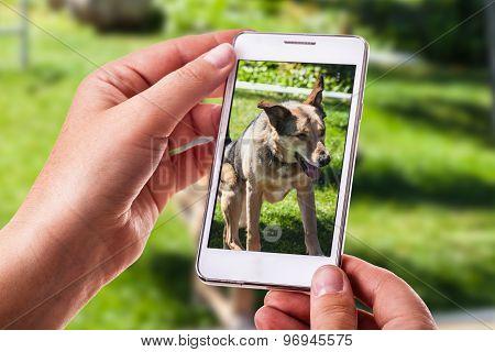 Dog Phone Photography