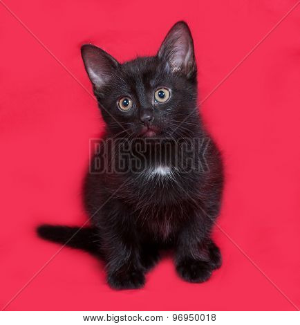 Small Black Kitten Sitting On Red