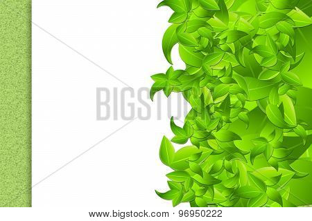 Leaves On White Framework