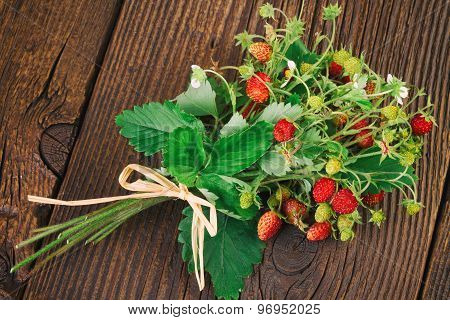 Woodland Strawberry - Wild Strawberry (Fragaria vesca) Alpine Strawberry