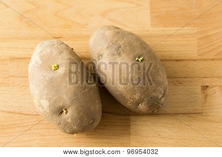 Potato sprouts