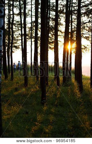 Evening sun the trees a pair of boy and girl walk together love romance