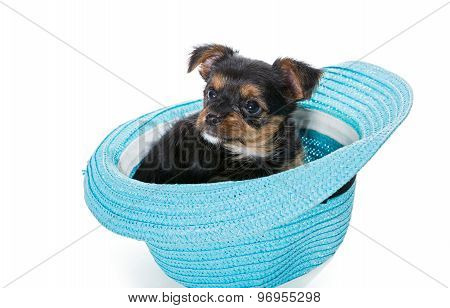 Small Yorkshire Terrier Sitting In A Beach Hat