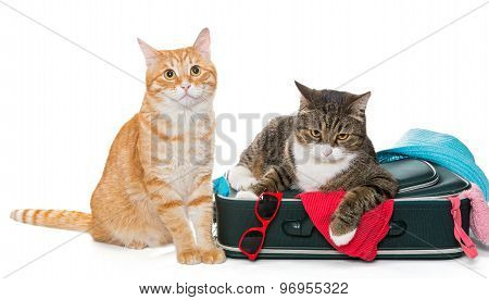 Two Striped Cat Lying With A Suitcase