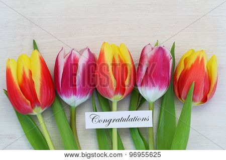 Congratulations card with colorful tulips