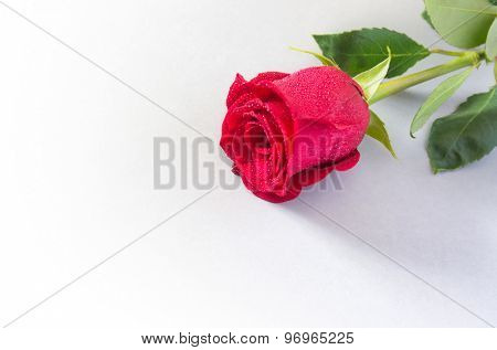 Closeup on a beautiful single red rose with water drops