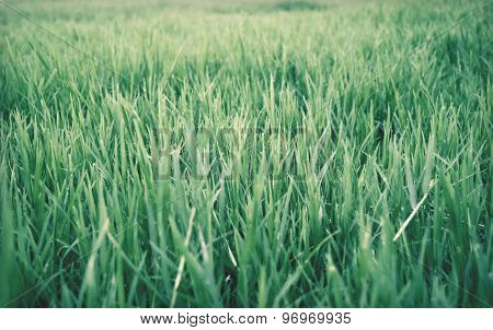 View The Green grass meadow abstract background -  helga retro style