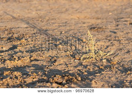 Lost plant on the drought land earth dried without rain
