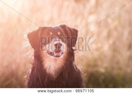 Dog Backlit Portrait
