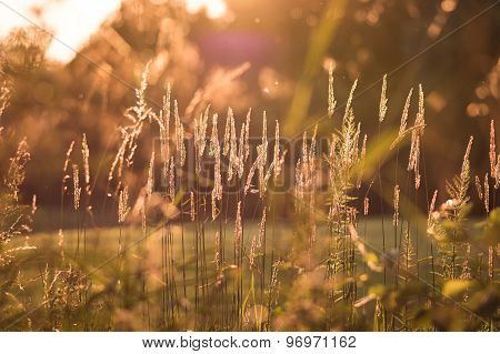Plants in backlight with bokeh
