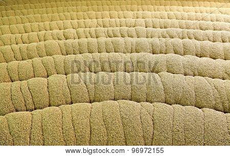 Industrial production of malt. A huge vat