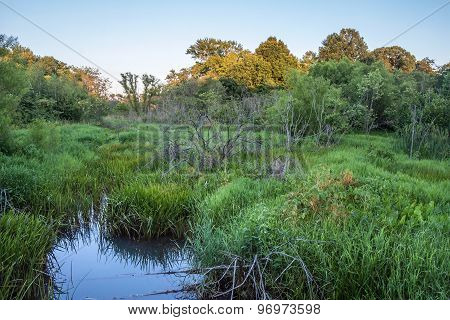 New Jersey Wetland
