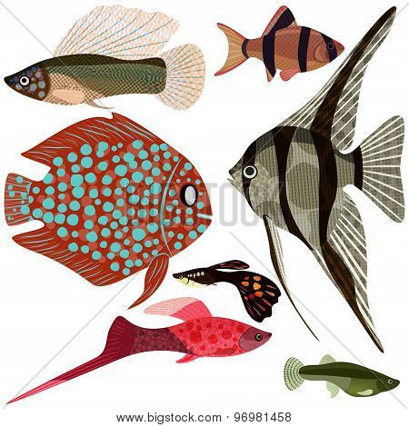 Collection Aquarium Fishes.