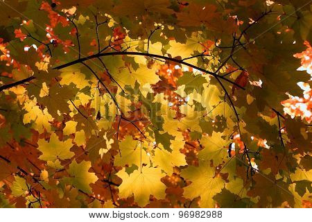 autumn leaves on tree in forest background