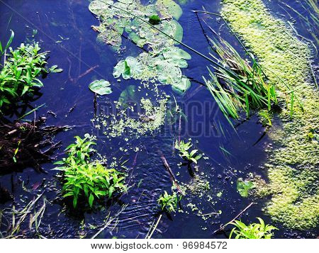 forest river algae