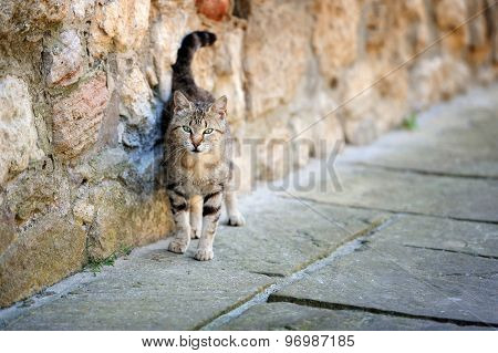Stray Cat Sitting By Near Wall