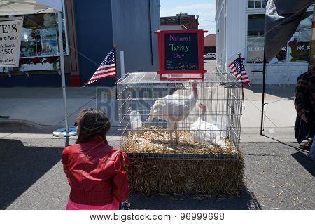 Caged Turkeys