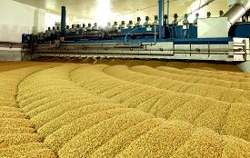 picture of malt  - Industrial production of malt - JPG