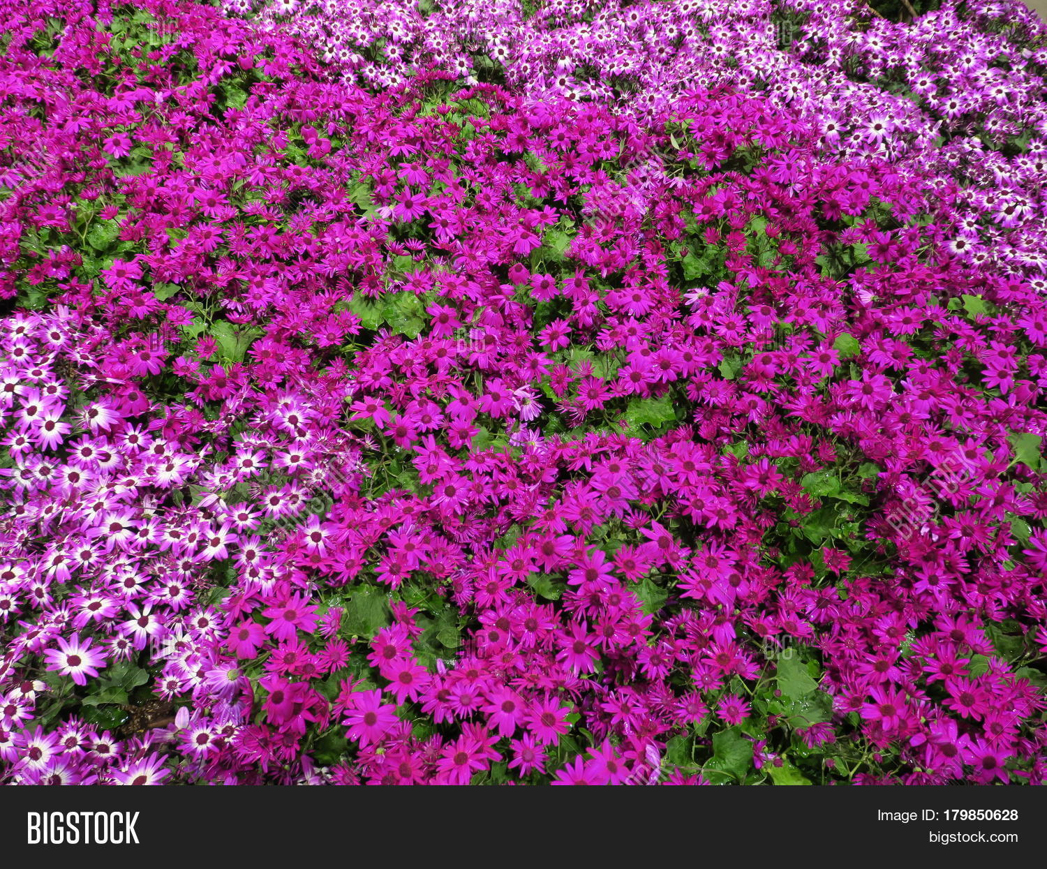 Beautiful Flowers Chicago Home Image Photo Bigstock