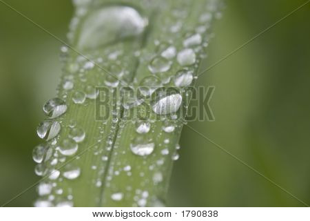 Leafdroplets2