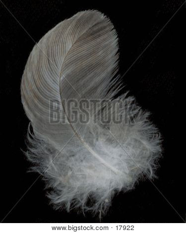 Feather 8