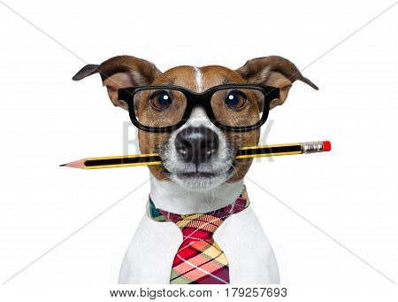 Dog With Pencil At The