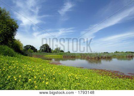 Verão Marsh e Prado