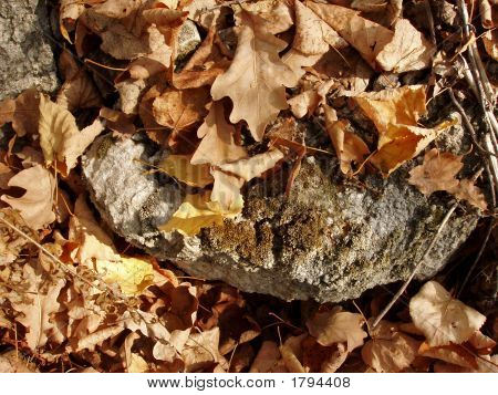 Limestone Covering By Leaves