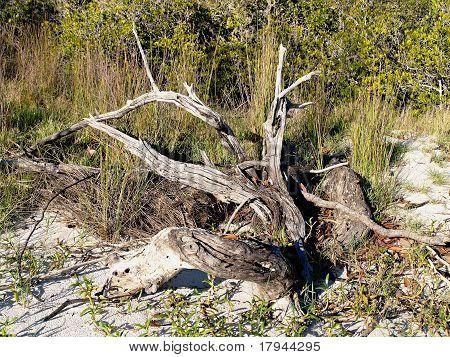Artistic Driftwood On White Sandy Island Beach.