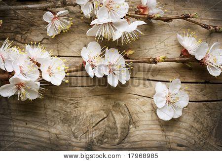 Spring Blossom over wooden background