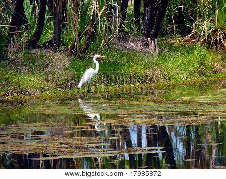 Crane at Palmerston Lake