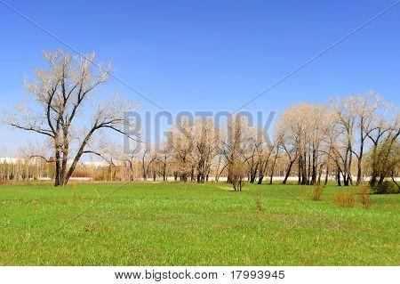Lifeless trees