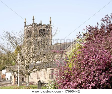 Bingley Church And Cherry Blossom