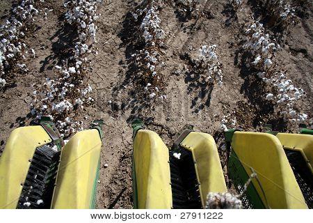 Cotton Tilling