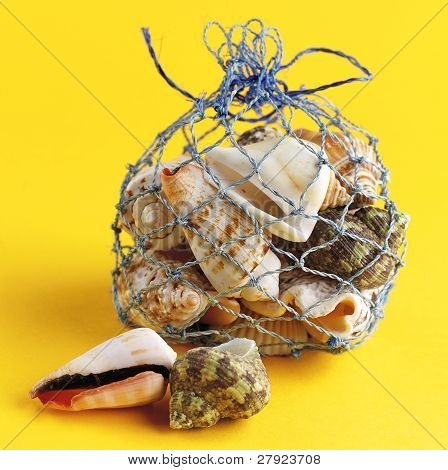 bag of shells