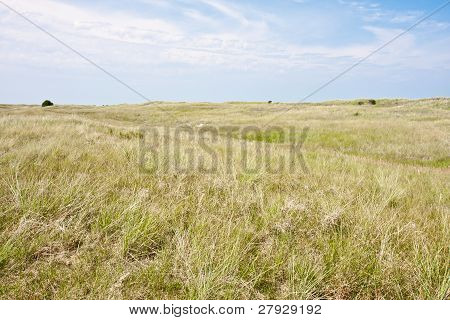 Dune Landscape At The Dutch Coast