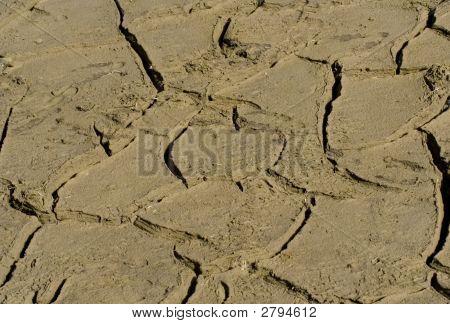 Cracked Mud