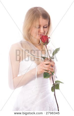 Bride Smell Red Rose