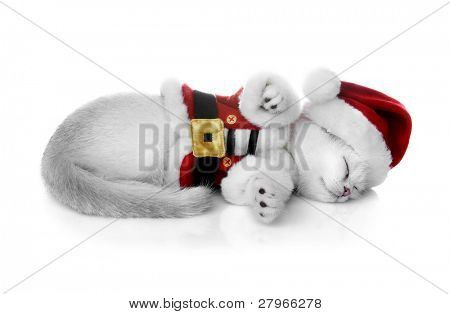 Kitten in a New Year's suit sleeps on a white background. Kittens of the British breed. Rare coloring - a silvery chinchilla ?