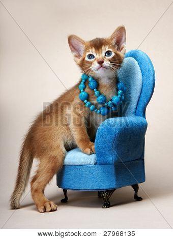 Abyssinian kitten. Age - 1 month