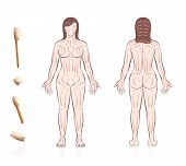Body Skin Brushing. Dry Skin Brushing With Directions Of Brush Strokes. Health And Beauty Treatment  poster