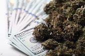 Cannabis Business Concept. Medical Marijuana And Money poster
