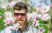 Man With Beard And Mustache Wears Sunglasses, Magnolia Flowers Background. Brutality And Tenderness  poster