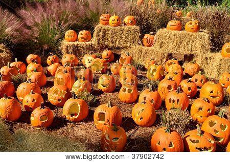 Carved pumpkins on display