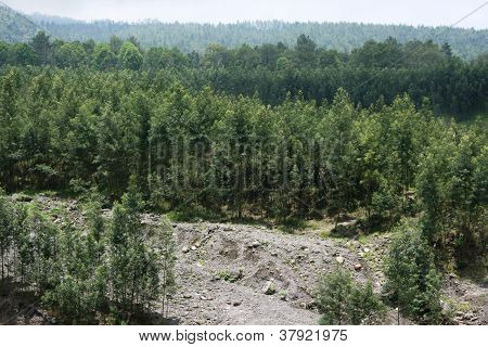 view of the vegetation