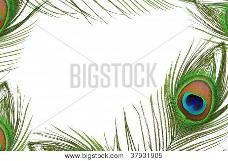 Frame Of Peacock Feather Eye
