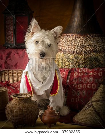 Dog dressed as Aladdin