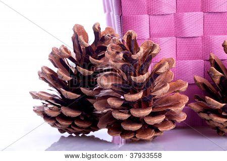 decorating Pine Cones