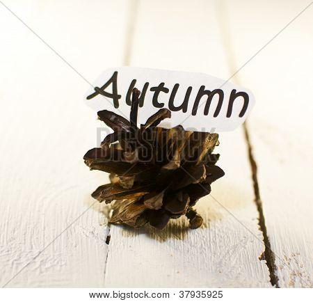 autumn bump