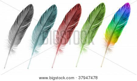 Feather Pen Set Of Abstract Color